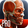 Mografi - Anatomy In Motion - Complete - Muscle System Flashcards for iPhone and iPad artwork
